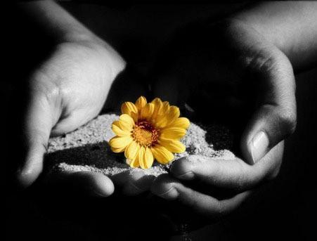 la vita è un dono